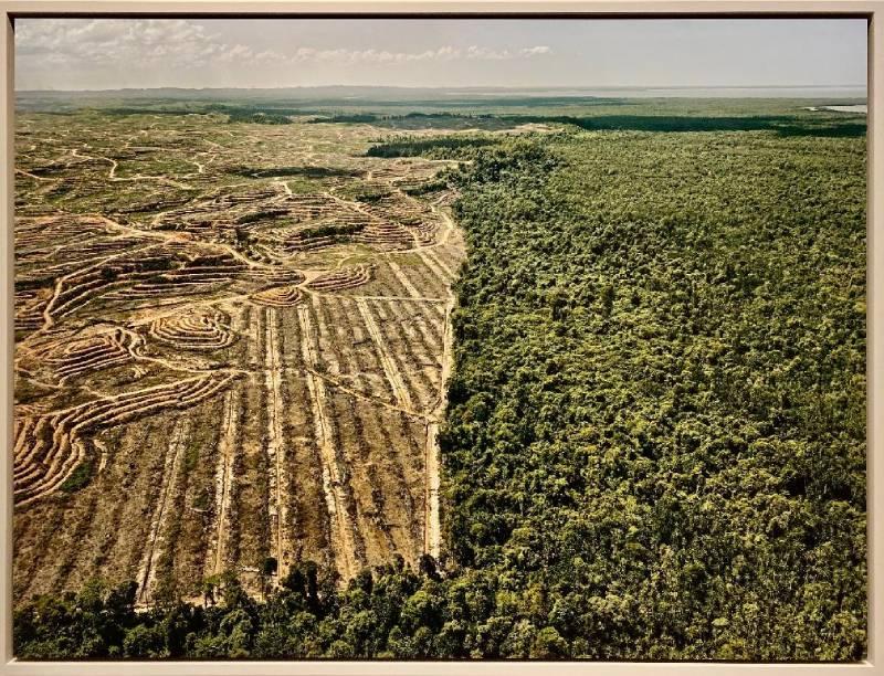 disboscamento Malesia, altra testimonianza alla mostra Anthropocene al Mast a Bologna