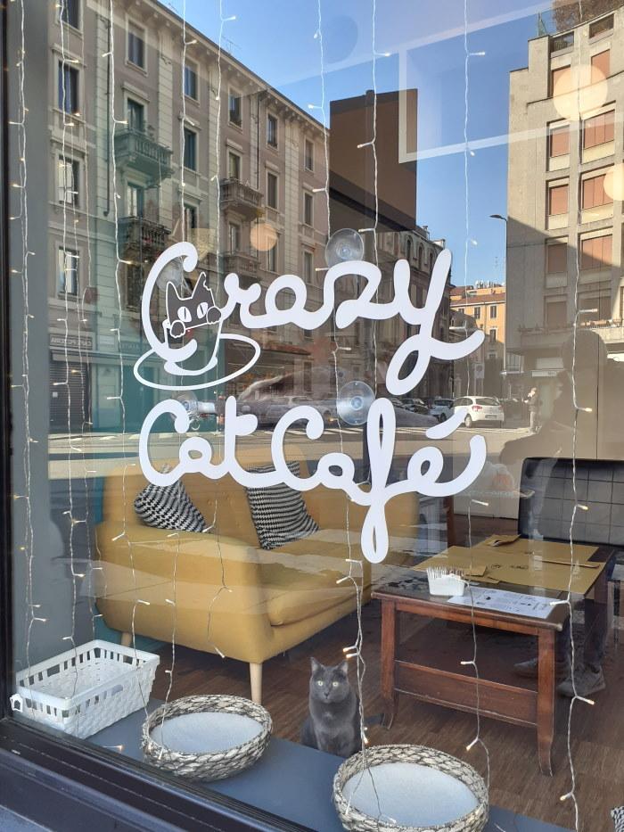 Crazy cat Café Milano