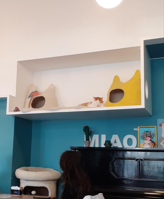 interno del caffé dei gatti a Milano