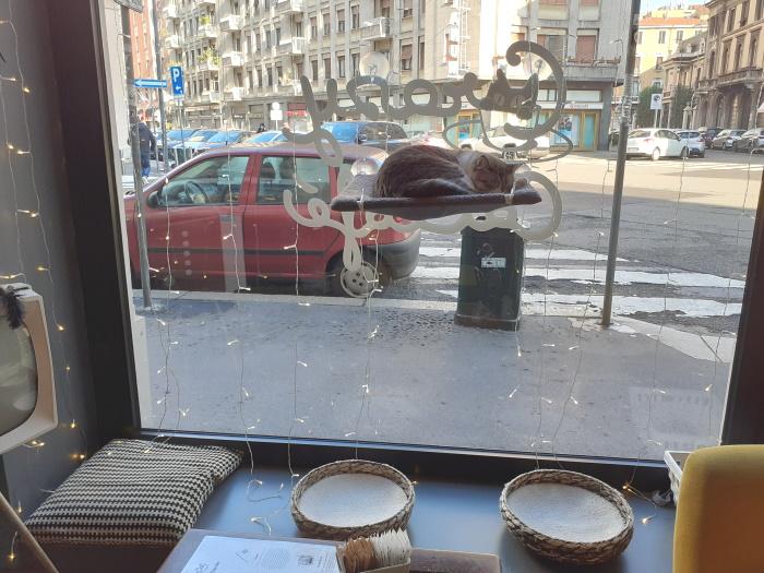 Un gatto del Crazy Cat Café di Milano seduto comodamente sulla mensola